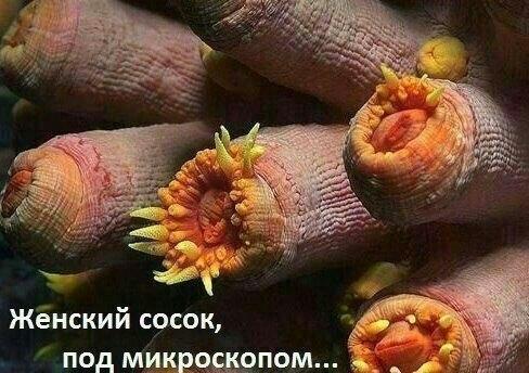 u-menya-soski-kak-u-devushki