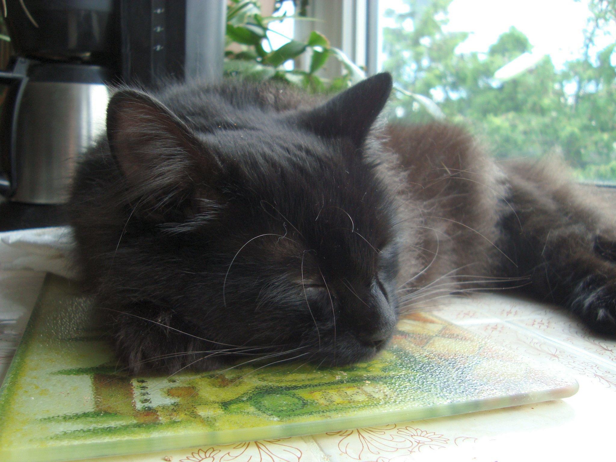 sleepingbarnabykitchen2