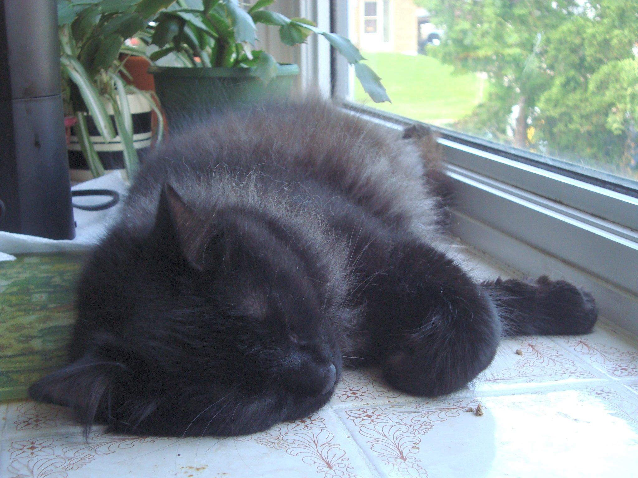 sleepingbarnabykitchen3