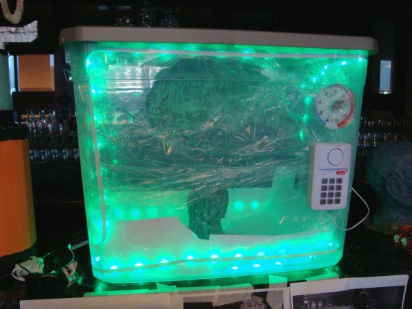 brainofmorbius