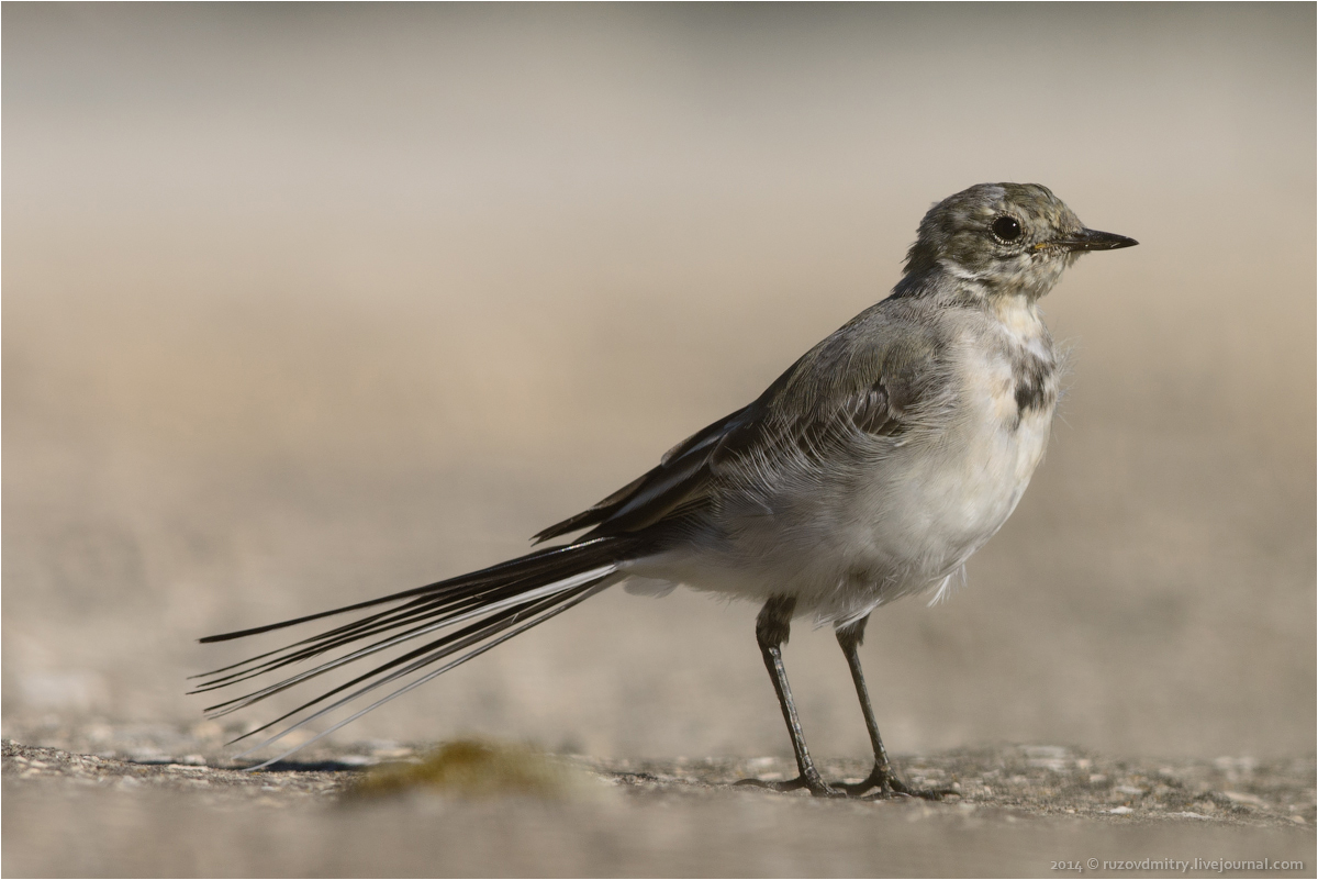 Прикольные фотографии птиц и животных в лесу кофеёк
