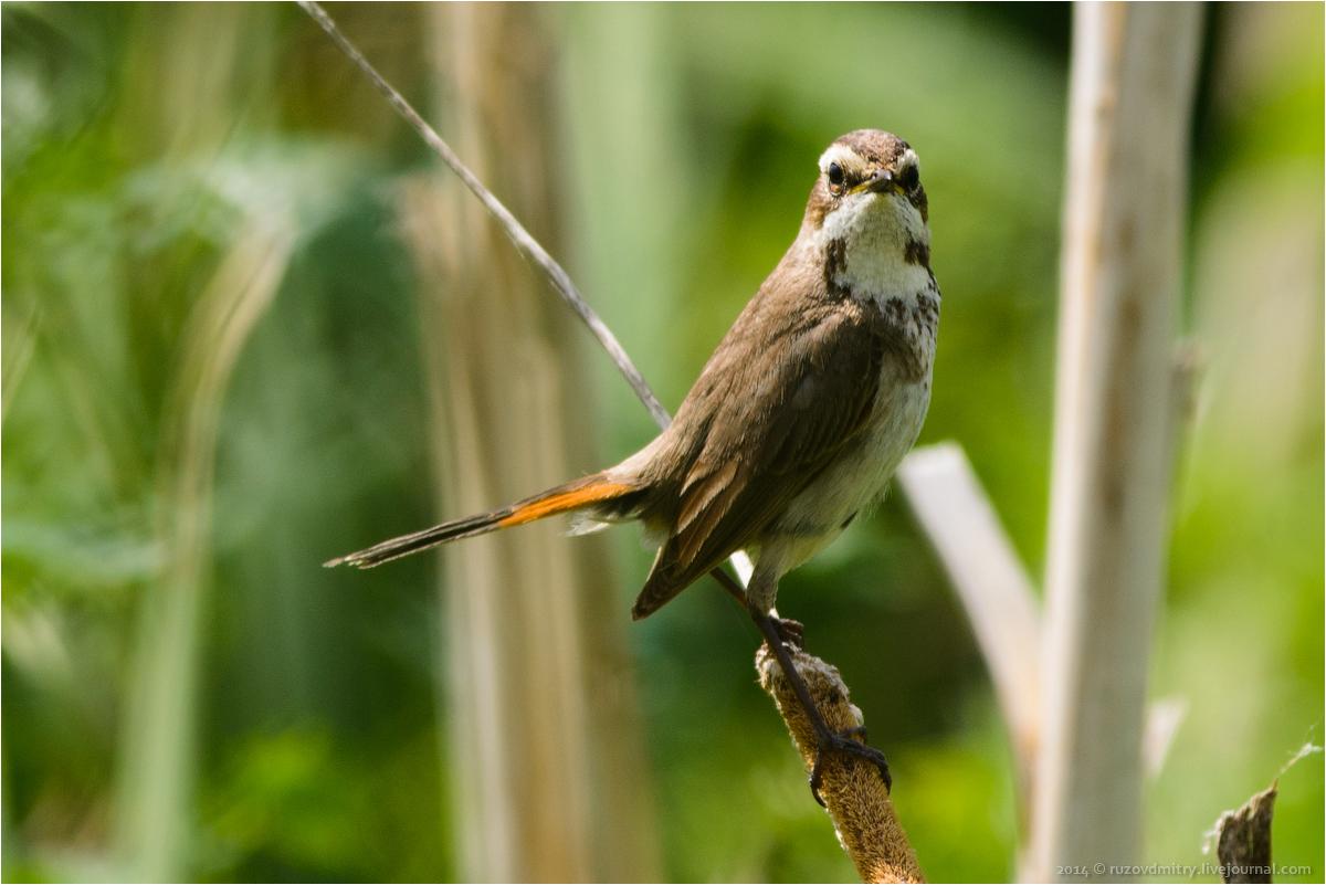 Птицы самарской области
