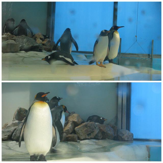 1-мюнхен зоопарк2