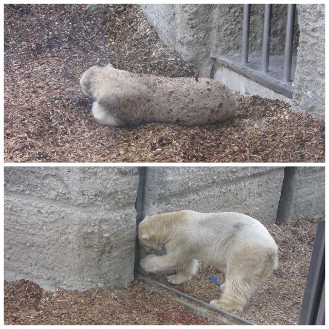 1-мюнхен зоопарк7