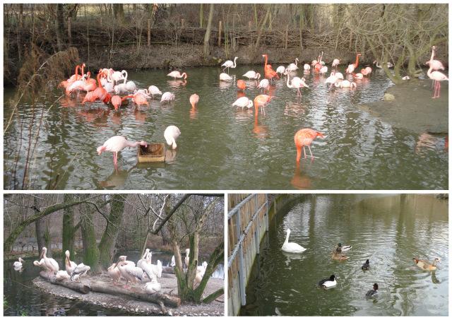 1-мюнхен зоопарк11