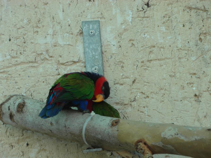 иерусалим зоопарк (5)