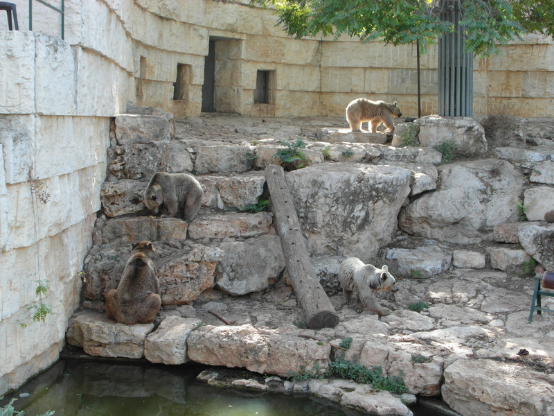 иерусалим зоопарк (6)