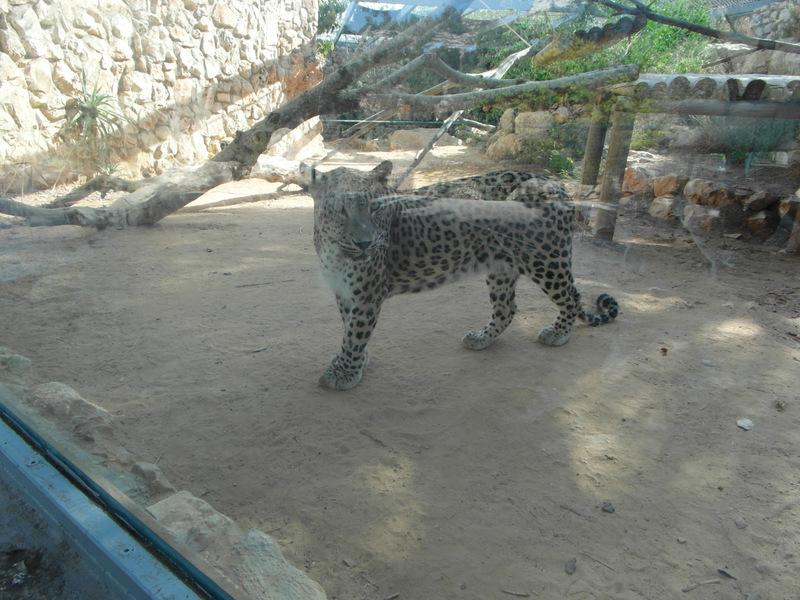иерусалим зоопарк (9)
