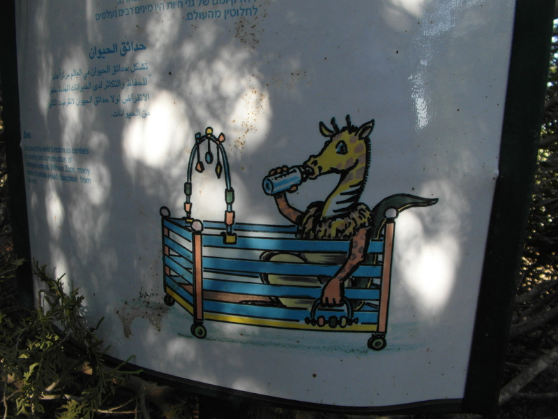 иерусалим зоопарк (14)