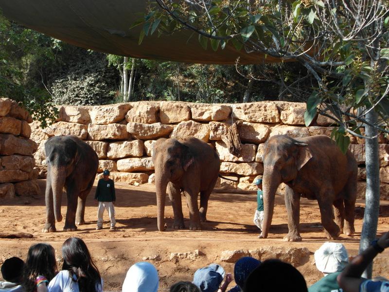 иерусалим зоопарк (15)