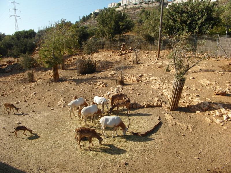 иерусалим зоопарк (16)