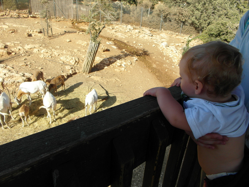 иерусалим зоопарк (17)