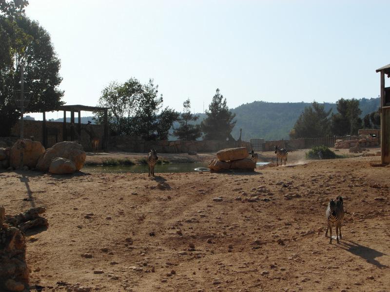 иерусалим зоопарк (18)
