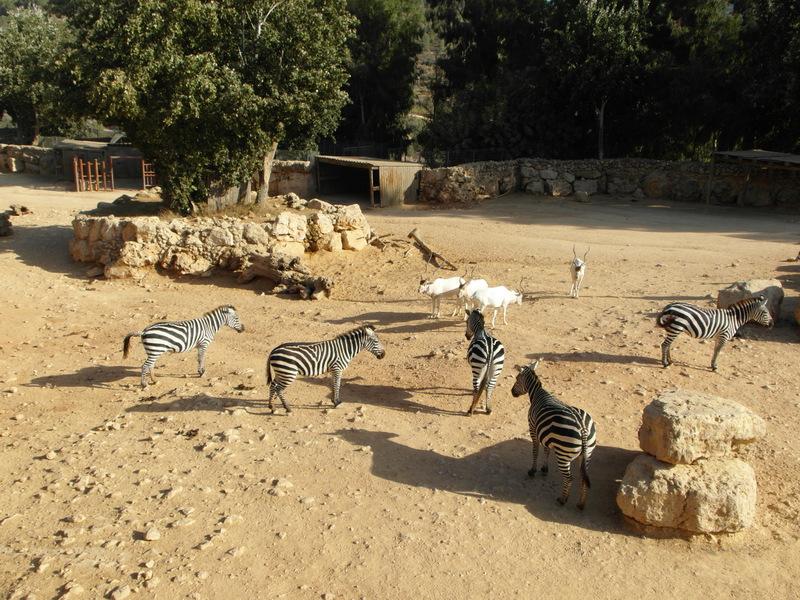 иерусалим зоопарк (19)
