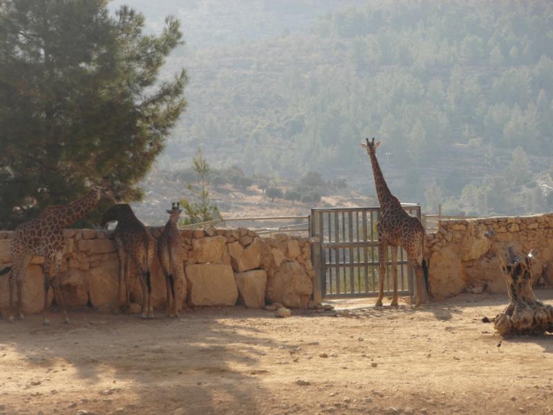 иерусалим зоопарк (20)