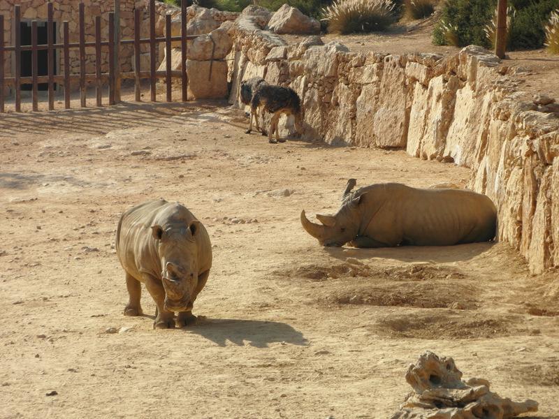 иерусалим зоопарк (21)