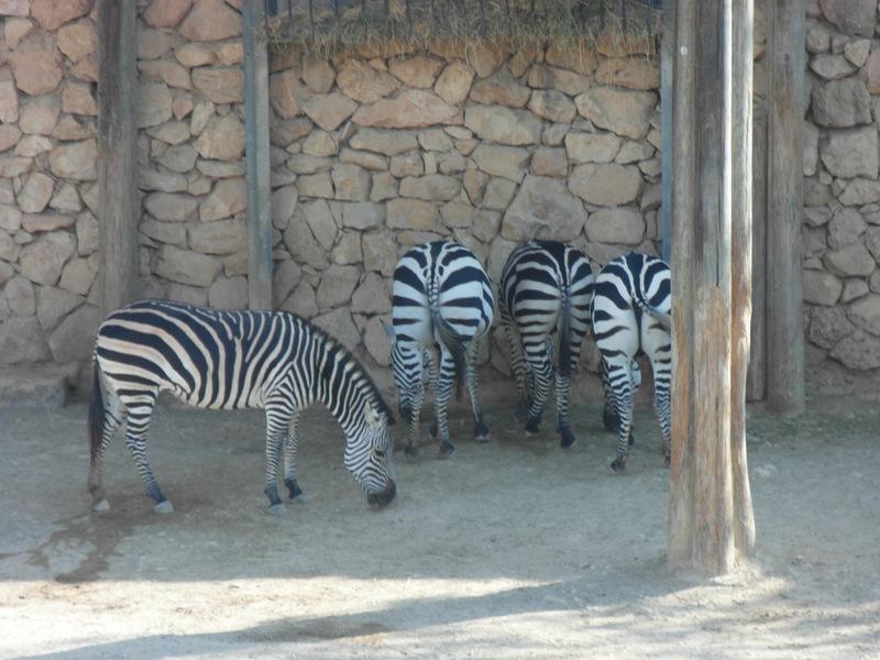 иерусалим зоопарк (23)