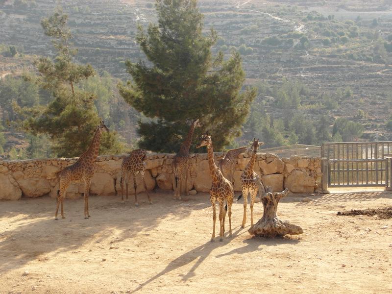 иерусалим зоопарк (24)