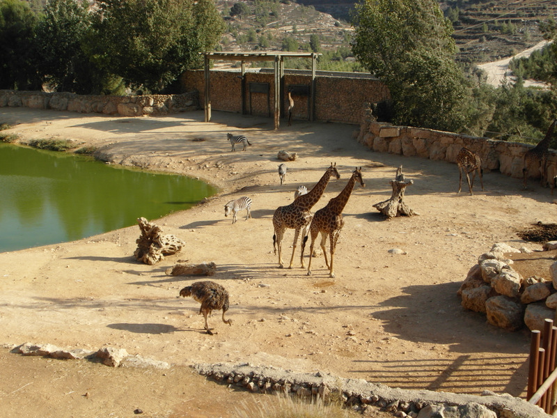 иерусалим зоопарк (25)