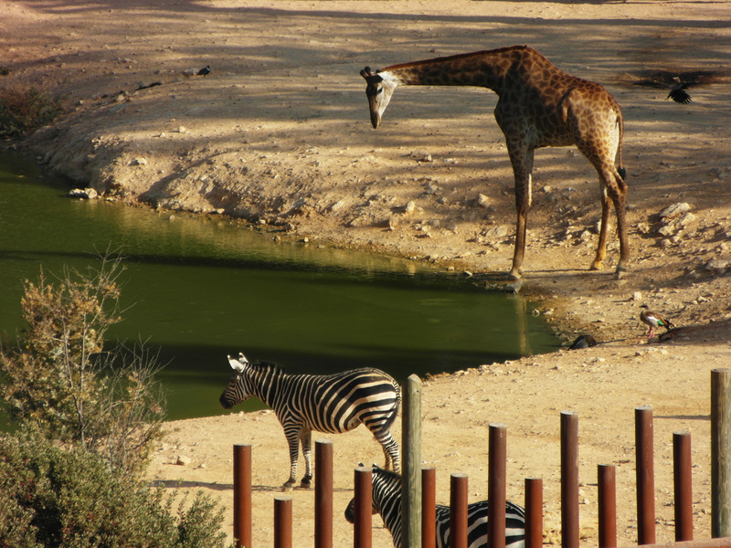 иерусалим зоопарк (29)