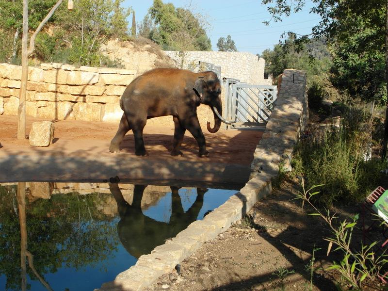иерусалим зоопарк (33)