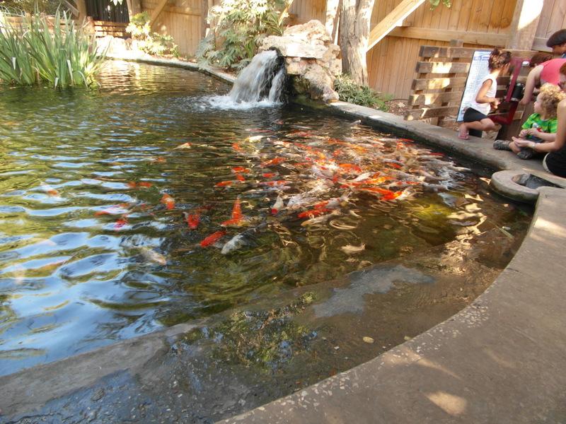 иерусалим зоопарк (34)