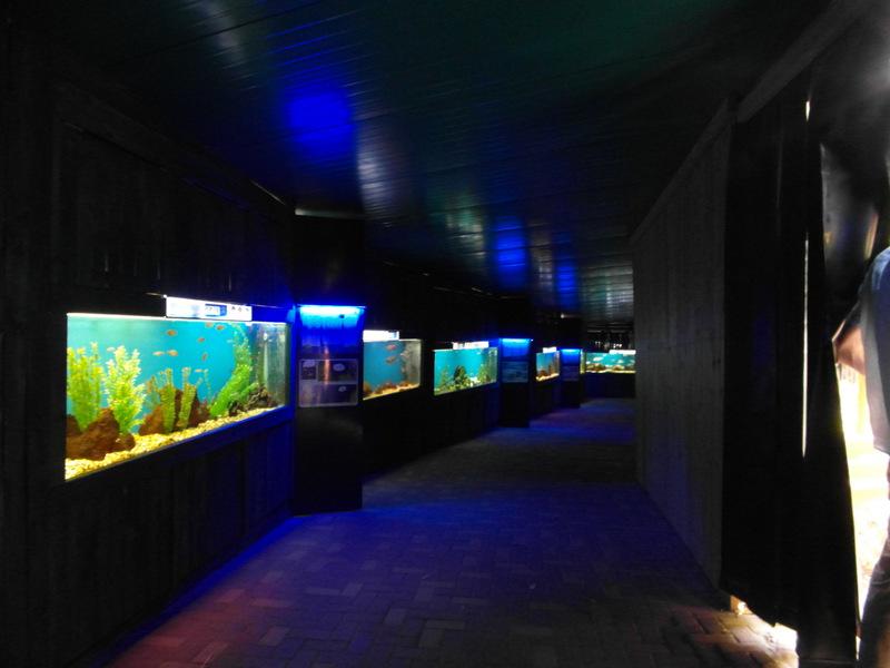 иерусалим зоопарк (37)