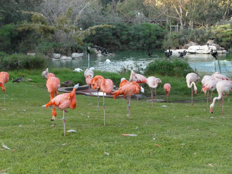 иерусалим зоопарк (43)