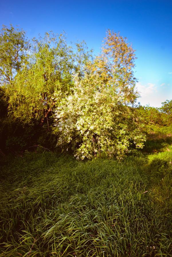 Весна на пруду. г. Новочеркасск