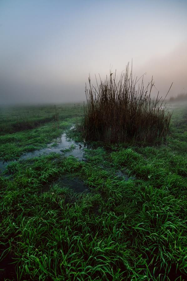 Лаливная трава