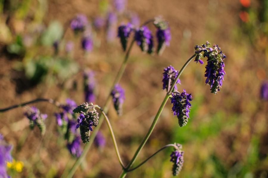 Неизвестные травы