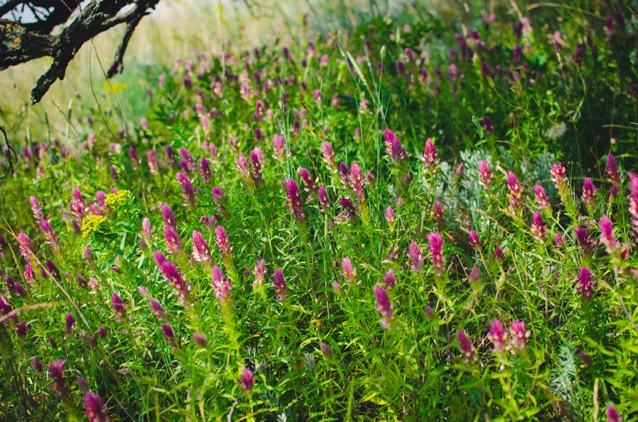 Неизвестная полевая трава
