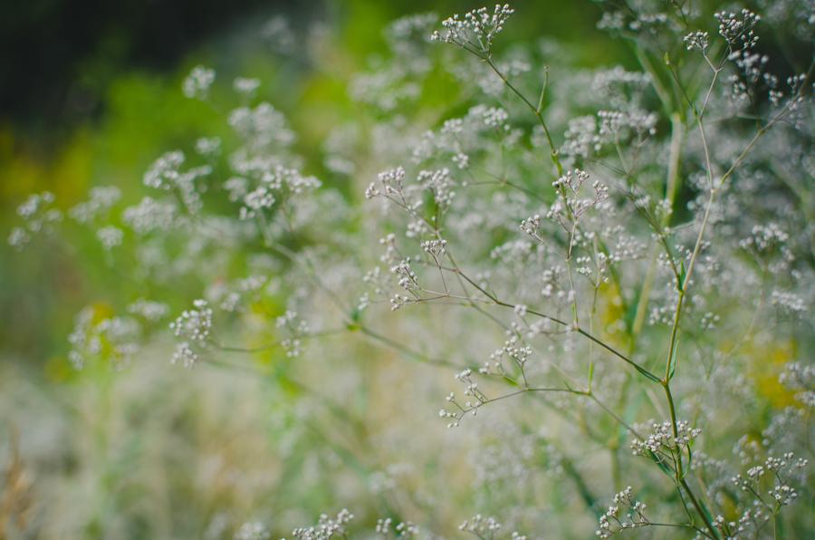 Неизвестное полевое растение