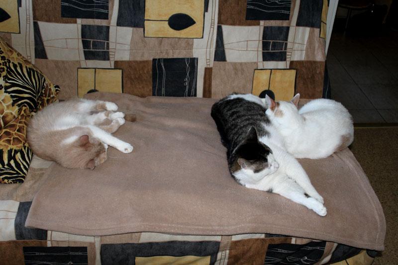 Три-кота