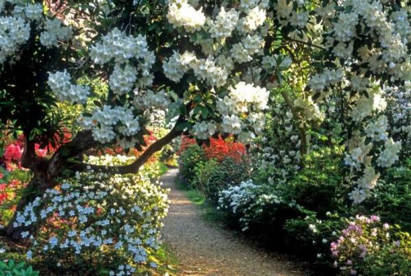 sadyi_leonardsli_leonardslee_gardens_