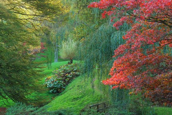 sadyi_leonardsli_leonardslee_gardens_ (1)