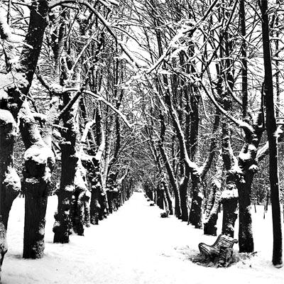Зима-(аллея)