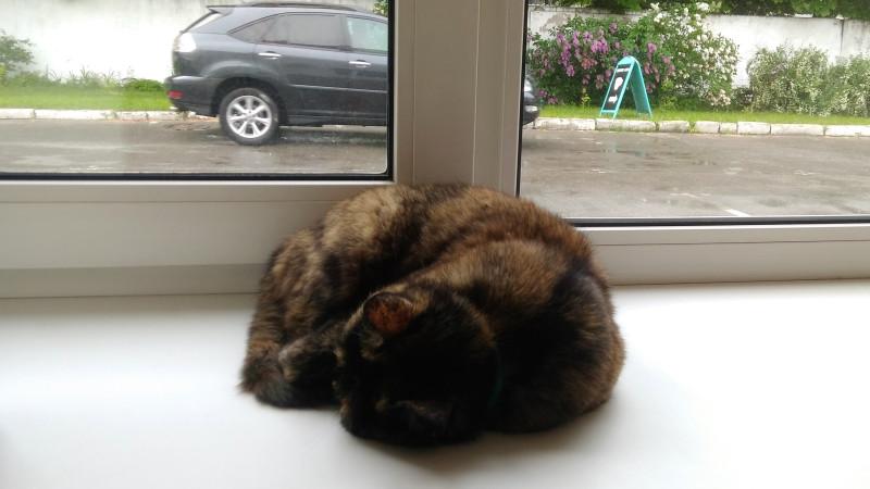 Кошка спит... Фото: С. Плотников.