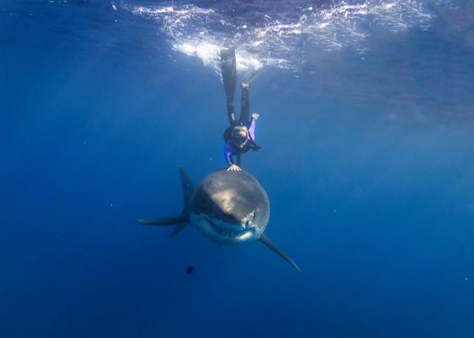 Блондинка плавает с акулами-убийцами