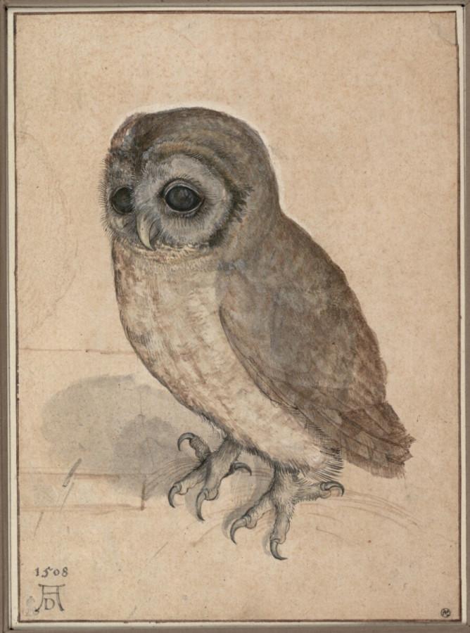 The-Little-Owl_Albrecht-Durer_Northern-Renaissance.jpg