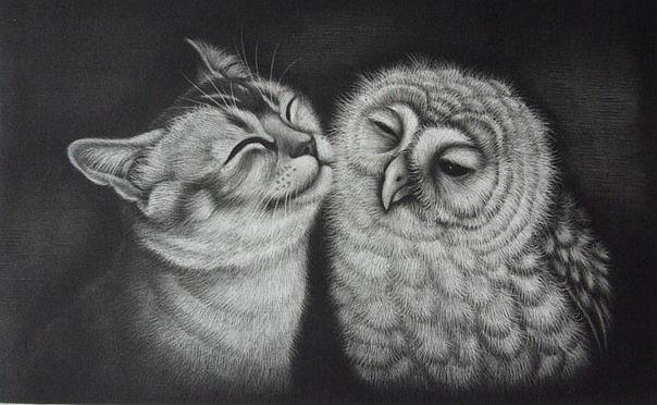 Кошка и Сова