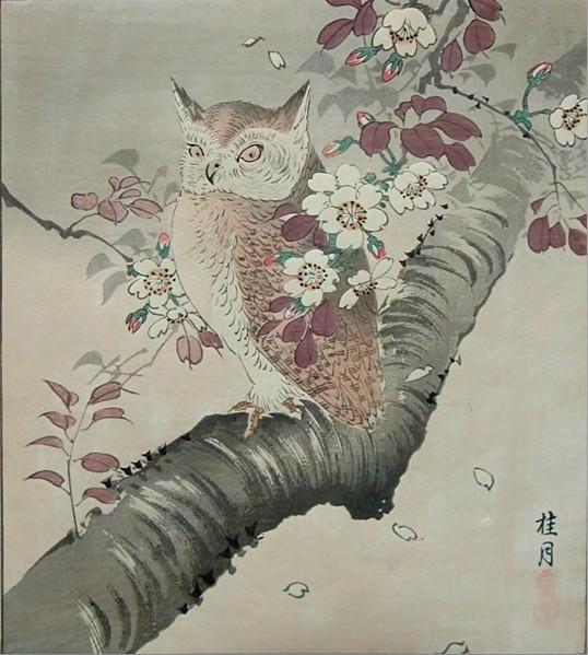 Owl on Cherry Tree