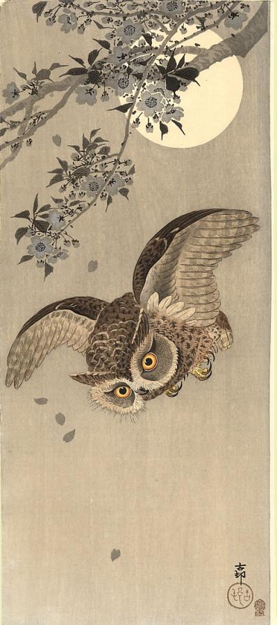 Scops Owl in Flight 1910