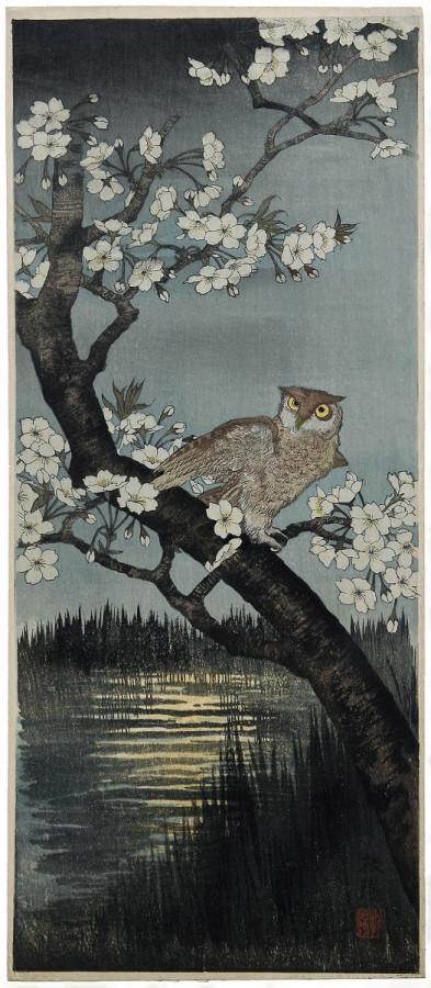 Owl and Cherry