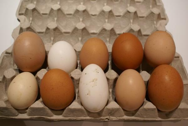 домашние яйца_2