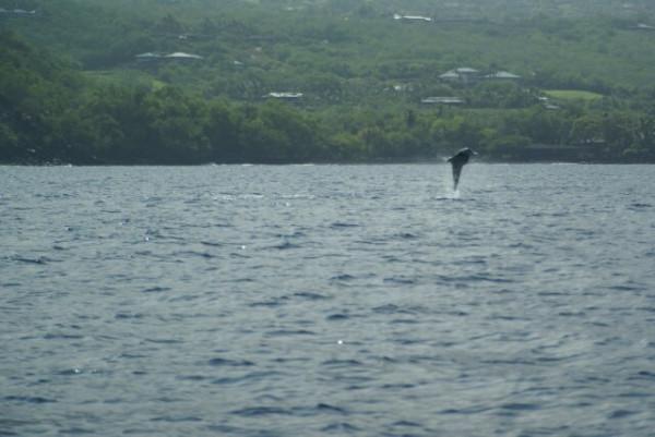 hawaii4302.jpg