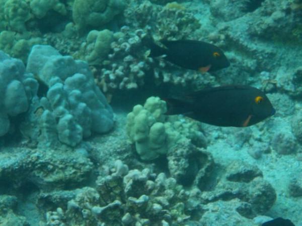 hawaii4306.jpg