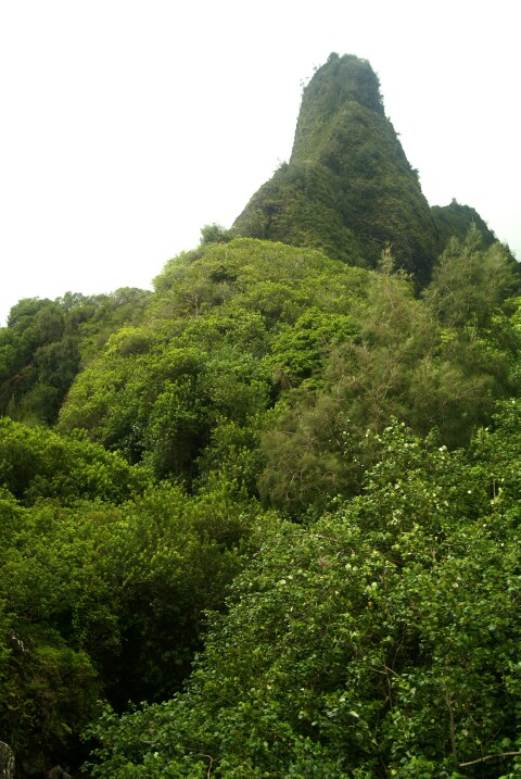 hawaii05071.jpg