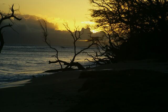 hawaii05073.jpg