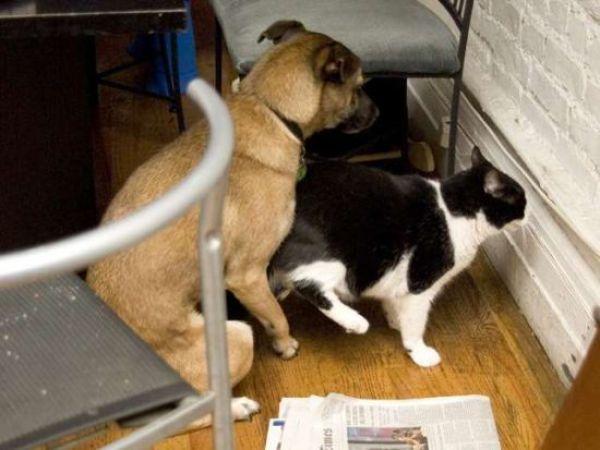 собака с кошкой сношаются